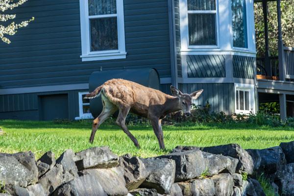 repel-deer-control